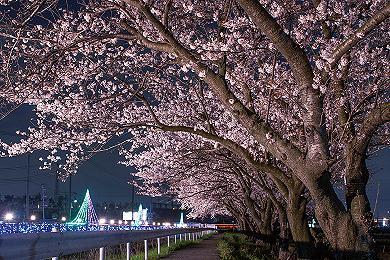 「春の夜」宇田川 巌 氏